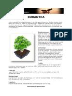 Fiche de Culture Bonsai - Durantha