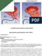 9. Afecțiunile organelor genitale masculine. Sifilisul.