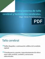 Anatomía externa de tallo cerebral y hemisferios cerebrales