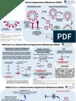 SARS CoV 2 e Sistema Renina Angiotensina Aldosterona