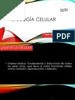 Fisiología celular jesli
