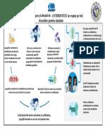 zeia_18_infografic