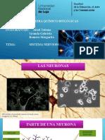 Sistema Nervioso de Los Vertebrados e Invertebrados
