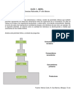 Guía AMPLIACIÓN Flujo de Materia y Energía en Los Ecosistemas.
