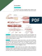 Contracción del musculo esquelético