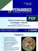 Identificação das organelas e suas funções (1)