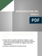 REPRODUCCION DEL KOALA
