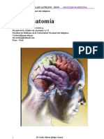 neuroanatomia1