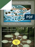Micología Forense - Biología Forense (Aguirre-Duarte-Potapczuk) (1)