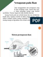 10. Perbedaan System an Pada Ikan Dan Burung