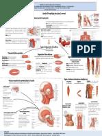 Infografia de Elizabeth Miologia