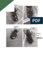 Trabajo Práctico N°11(Entomología F.)