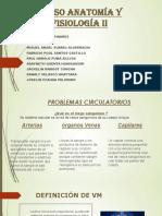 anatomia II