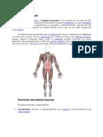 Sistema muscular- toño