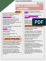1ª E 2ª SEMANAS DO DESENVOLVIMENTO EMBRIONÁRIO