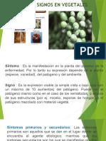 Fitopatologia II Sintoma y Signo