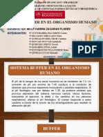Exposicion-sistema Buffer en El Organismo Humano (1)