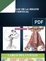 Músculos de La Región Cervical