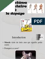 Le Système Musculaire Et Le Dopage