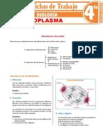 Citoplasma-para-Cuarto-Grado-de-Secundaria