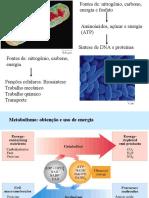 Aula 7 - Introdução ao metabolismo