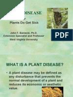 Diseases of various Plants