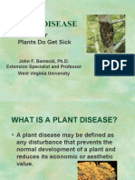 Diseases of various Plants