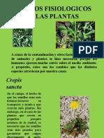 Cambios Fisiologicos en Las Plantas