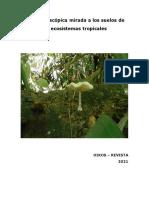 Una microscópica mirada a los suelos de los ecosistemas tropicales