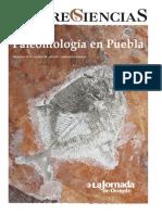 Paleontologia_en_Puebla_Saberes_y_Cienci