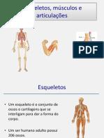 esqueleto-101005094426-phpapp02
