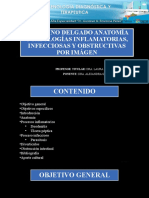 6.Intestino Delgado Anatomia, Diverticulos, Obstrucción Intestinal, Patología Infecciosa e Inflamatoria