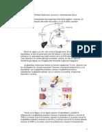 Sistema_endocrino,ejercicio_y_entrenamiento_fisico