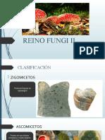 2°   REINO FUNGI II