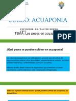 Curso de Acuaponia Las peces para Acuaponia