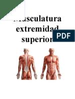 Musculatura EE.SS.