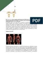 Definición sistema óseo. y musculardocx