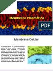 membrana e suas especializações.