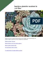 Totul despre îngrijirea plantelor suculente în ghiveci sau în aer liber