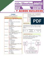 Proteínas-y-Ácidos-Nucleicos-para-Quinto-Grado-de-Secundaria (1)