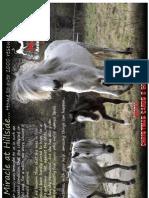 Hillside Animal Sanctuary Newsletter (Autumn 2010)