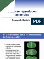sem6cap9mitosis-100825121839-phpapp01