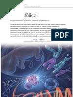 clubdelateta REF 192 Ácido Folico Requerimientos dieteticos durante el embarazo 1 0