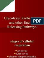 GLYCOLYSIS & KREB'S CYCLE