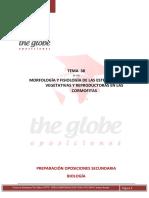 TEMA 38 6.1b  PLANTILLA THE GLOBE