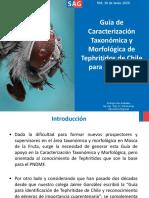 Caracterización Taxonómica y Morfológica de Tephritido de Chile