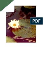 los cuatros fundamentos de la atención-anapanasatti sutta
