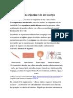 generalidades tejidos biologicos (4)