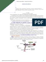 Anatomie Du Péritoine