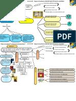 Mapa Conceptual Plantilla 13
